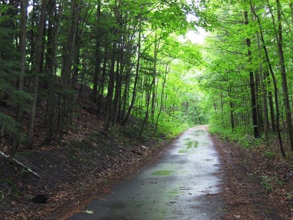 Paved trail in the rain amongst the trees