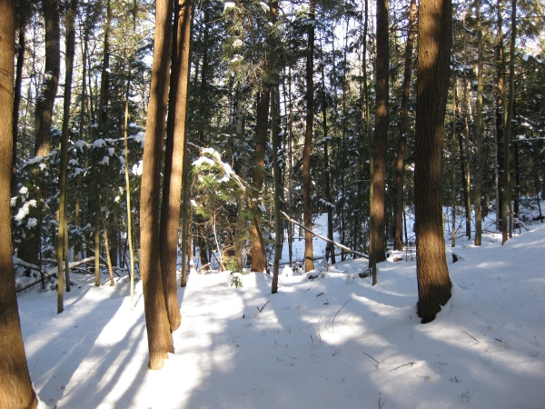 The forest in central Ontario.